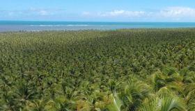 Conheça a Praia do Gunga em Maceió